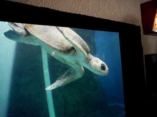 Centro Mexicano de la Tortuga: Aquarium