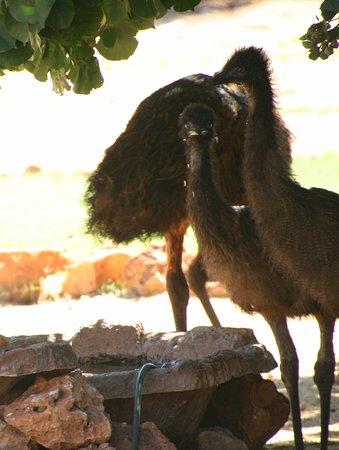 Sea Breeze Resort: Die Emu - Tränke