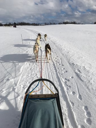 Roros Husky Day Tours