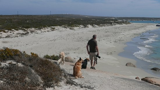 The Oystercatcher's Haven at Paternoster: Rock walk with the dogs of the house