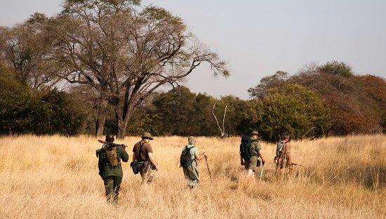Dorobo Safaris