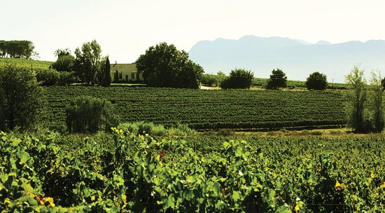 Paarl, Sudafrica: Beautiful view overlooking our vineyards on the farm
