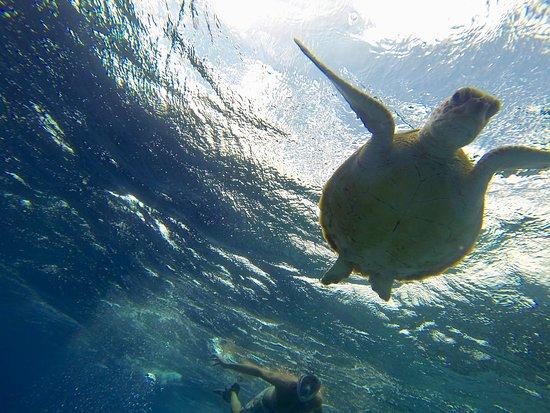 Sea Cow Snorkeling Trips : Twee keer een zee schildpad gezien