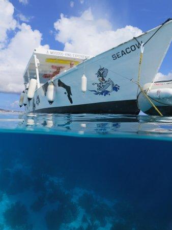 Sea Cow Snorkeling Trips : Geweldige boot!
