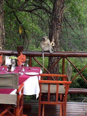 Marloth Park, Sudáfrica: terraza
