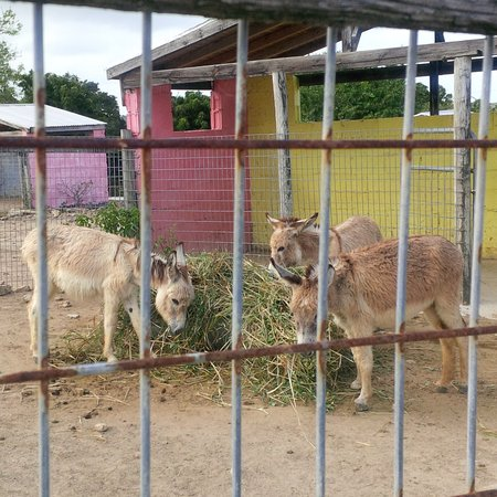 Antigua's Donkey Sanctuary (Saint Paul Parish) - Book in Destination