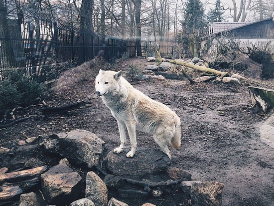 Калининградский зоопарк: photo3.jpg