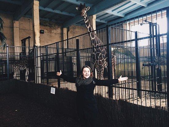 Калининградский зоопарк: photo7.jpg