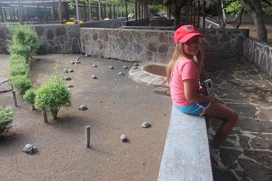 Puerto Villamil, الإكوادور: Chloé y las tortuguitas