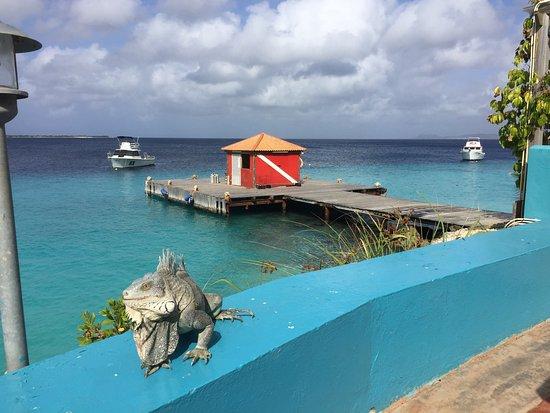 Rum Runners: photo1.jpg