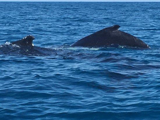 Green Flash Whale Tours: photo0.jpg