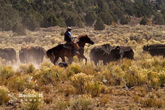 Antimony, UT: Cattle Drive