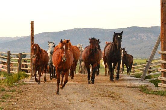 Antimony, ยูทาห์: Running Horses