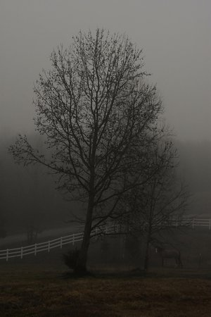 Landrum, Carolina del Sur: A misty winter morning with Secret (the horse) barely visible.