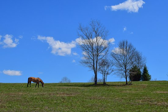 Landrum, SC: A sunny day for a horse to graze in the field.
