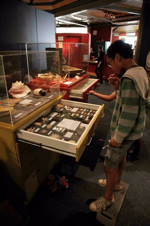Timaru, New Zealand: From fossils to fashions,  hundreds of wonderful things to see at South Canterbury Museum.