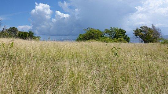 Port Maria, Jamaica: 👍😎🌴