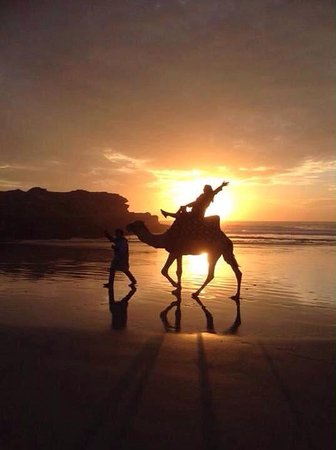Agadir Dromadaire