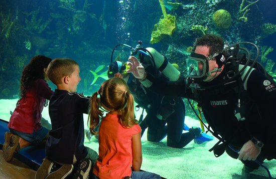 Newport Aquarium: Guests often discover divers swimming right alongside more than two dozen sharks and shark rays.