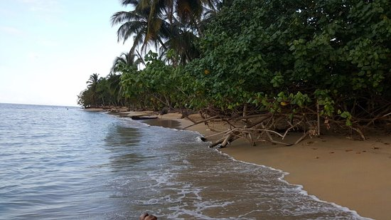 Playa Grande Surf Camp and Surf School: Trees aside the beach.