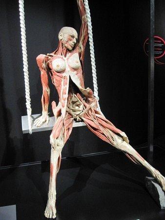 Body Worlds: alle modellen in beweging vastgelegd