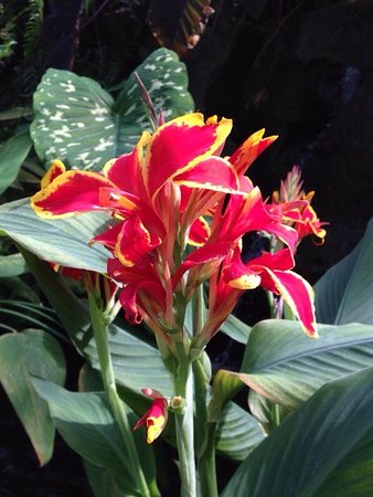 Howard Peters Rawlings Conservatory and Botanic Gardens of Baltimore: photo2.jpg