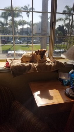 Crown City Inn: Our dog loved sunning herself in the window! View is of Orange St.