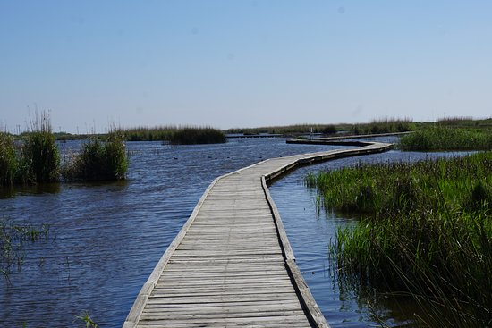 Port Arthur, TX: walking through the marsh