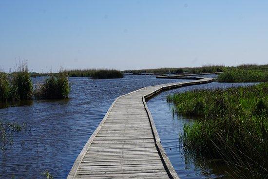 Sea Rim State Park: walking through the marsh