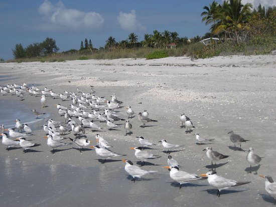 West Wind Inn: Beach View