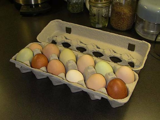 Brooksville, ME: Eggs from a local farm.