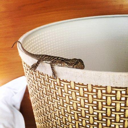 RACV Noosa Resort: photo3.jpg