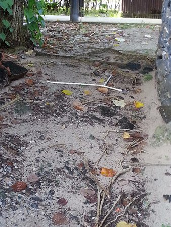 Manase, Samoa: exit from fale, negotiating pipes and roots that can't be seen of a night