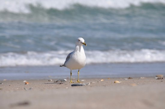 Canaveral National Seashore: lots to find beach combing