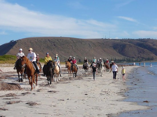 Normanville, Αυστραλία: High Country Trails right next door for a beautiful horse trail ride on the beach