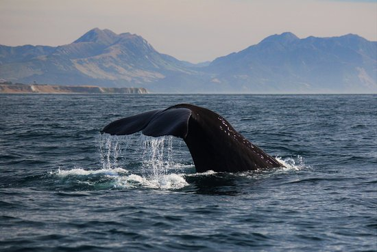Kaikoura, New Zealand: Tail time