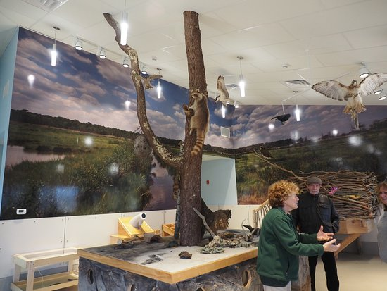 Cattus Island County Park: Inside the nature building