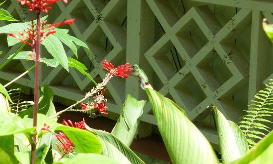 Diamond Botanical Gardens: Hummingbird