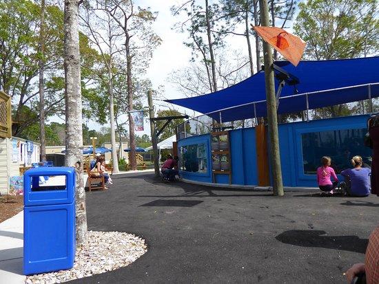 Seahorse Tank At St Augustine Aquarium Picture Of St