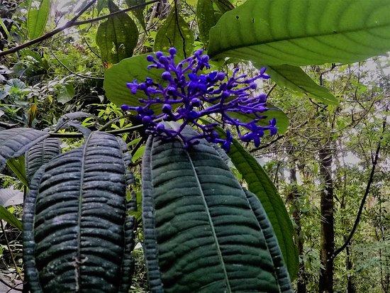 Golf von Papagayo, Costa Rica: Flora16