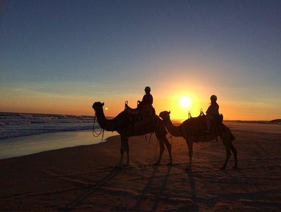 Anna Bay, Australien: Sunset camel ride