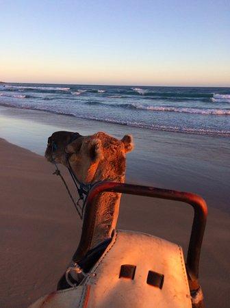 Anna Bay, Australien: camel ride at sunset on the beach