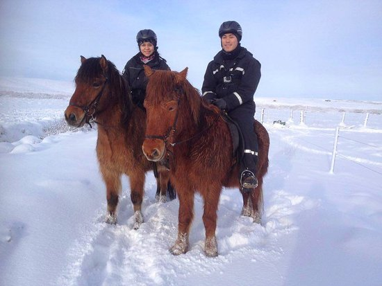 Icelandic HorseWorld : Beautiful snowy morning!