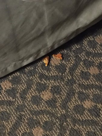 The Country Inn at the Mall: Pizza crust found under our bed - not ours!