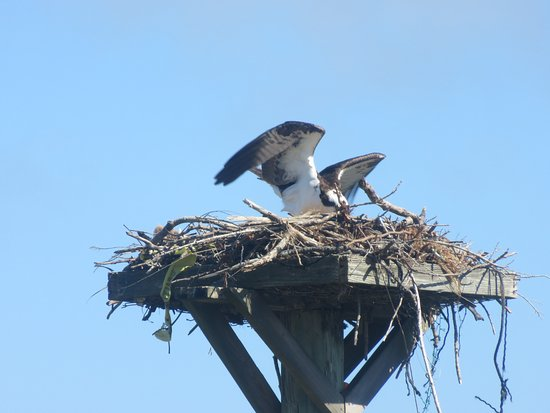 Bowditch Point Park : The Osprey's Nest