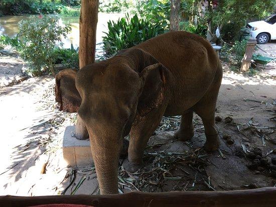 Kok Chang Safari Elephant Trekking: photo1.jpg