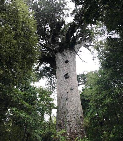 Opononi, Yeni Zelanda: photo0.jpg