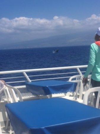 Lahaina Cruise Company: Just one of many!
