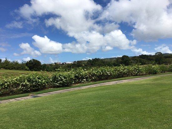 St James, Barbados: photo4.jpg