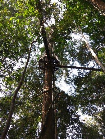 Taman Negara National Park, Malaysia: IMG_20170316_102551_large.jpg